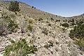 Near Cottonwood Canyon - Flickr - aspidoscelis (1).jpg