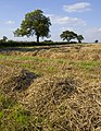 Near Rectory Farm, Lockington - geograph.org.uk - 972077.jpg