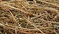 Needle in haystack2.jpg
