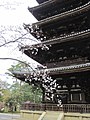 Ninna-ji National Treasure World heritage Kyoto 国宝・世界遺産 仁和寺 京都41.JPG