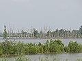 Noordwaard Polder in de Biesbosch.jpg