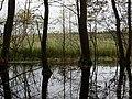 North of the Teufelsbruch swamp in autumn.jpg