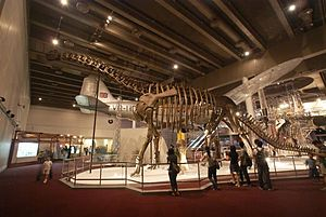 "Nurosaurus - ""Nurosaurus qaganensis"" as displayed in the Science Museum, Hong Kong."