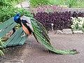 OL Botanischer Garten 4.jpg