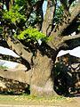Oak Avenue Potchefstroom-001.jpg