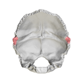 Occipital bone Lateral angle04.png