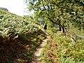 Offa's Dyke Path - geograph.org.uk - 237110.jpg