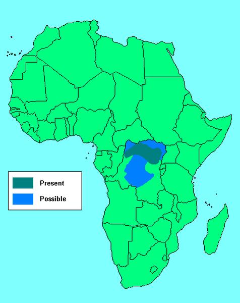 El Okapi (Okapia johnstoni)
