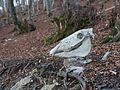 Okina - Cráneo de caballo 01.jpg