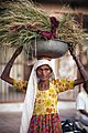 Old woman carrying grass, Rajasthan (6361059729).jpg