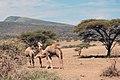 Olduvai 2012 05 31 2818 (7522640206).jpg