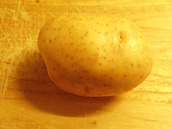 One organic Melody potato grown in Worcestershire in 2015.jpg