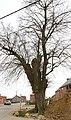 Opgaande linde met boomkapel - 374866 - onroerenderfgoed.jpg