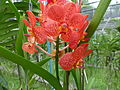 Orchids in Thailand 2013 2738.jpg