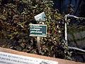 Orto botanico di Napoli 52.jpg