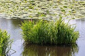 """Osterholz-Scharmbeck, Naturschutzgebiet """"Breites Wasser"""" -- 2018 -- 3026.jpg"""