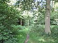Oxhey Woods, London Loop long distance walk - geograph.org.uk - 1375416.jpg