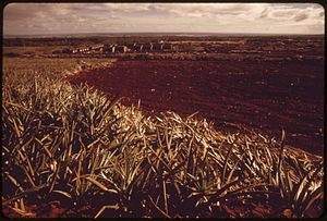 Mililani, Hawaii - Pineapple fields in Mililani Town, 1973.  Photo by Charles O'Rear.