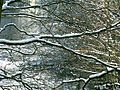 POL-Rezerwat przyrody Buczyna nad Słupią 051s.jpg