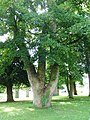 Palace Demesne grounds , Armagh - geograph.org.uk - 1390170.jpg