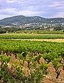 Parcellaire du vignoble de Saint-Saturnin-lès-Apt.jpg