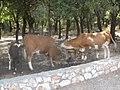 Park Goren, Israel 01.jpg