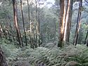 Parque Nacional Cusuco.jpg