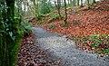 Path to Glenoe Glen - geograph.org.uk - 639551.jpg
