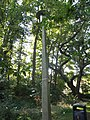 Path to Station Approach - Solihull - lamppost (8012160188).jpg