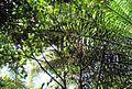 Pepohonan di semak belukar (3).JPG