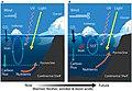 Phytoplankton in the Antarctic Continental Shelf Zone.jpg