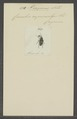 Piazurus - Print - Iconographia Zoologica - Special Collections University of Amsterdam - UBAINV0274 030 03 0047.tif