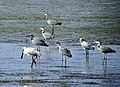PikiWiki Israel 40735 Wildlife and Plants of Israel.JPG