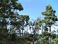 Pikku Leikosaari - panoramio (1).jpg