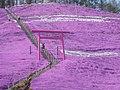 Pink Shinto shrine-Shibasacra Park,Higashi-Mokoto - panoramio.jpg
