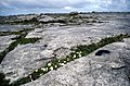 Poll Salach, limestone pavement with burnet rose. - geograph.org.uk - 65217.jpg