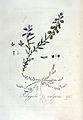 Polygala vulgaris — Flora Batava — Volume v3.jpg