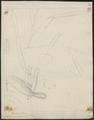 Polytmus gramineus - 1700-1880 - Print - Iconographia Zoologica - Special Collections University of Amsterdam - UBA01 IZ19100057.tif
