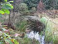 Pond in Yearhaugh plantation - geograph.org.uk - 595814.jpg