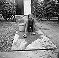 Portrait, girl, bucket, yard, grape, cleaning Fortepan 191.jpg