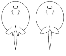 Porcupine river stingray in addition Search Vectors besides Luxury Fish Coloring Pages For Adults 91 About Remodel Online With as well Digital Collage Of Sea Life Logos 1059785 further Search. on deep water stingray