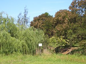 Potts Hill, New South Wales - Potts Hill bushland