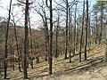 Prague Kunraticky Creek Slope1.jpg