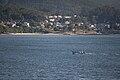 Praia de Boa Pequena - Noia - Galiza.jpg