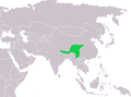 Prunella immaculata dist.png