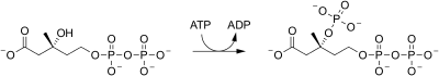 Pyrophosphomevalonate decarboxylase reaction (1).svg