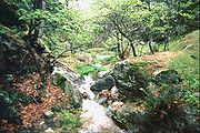 Abschnitt eines Quellbachs oberhalb von Maries