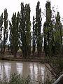 Río Chubut con turbiedad, febrero 2016 11.JPG