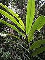 Rain forest 26.jpg