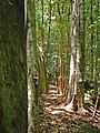 Rainforest walk (334979530).jpg